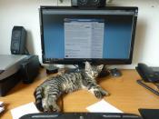 Schreibtisch mit Peripherie und 10 Wochen alter Katzenhardware.