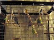Meine größten Fans (Tobi,Nicki,Ria,Mira,Chucky) ;-)